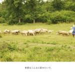 tomako5_0116s